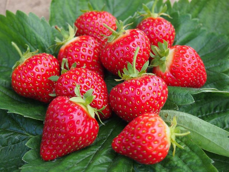 Форма ягод клубники сорта Хоней
