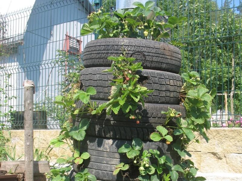 Вертикальное выращивание клубники в шинах